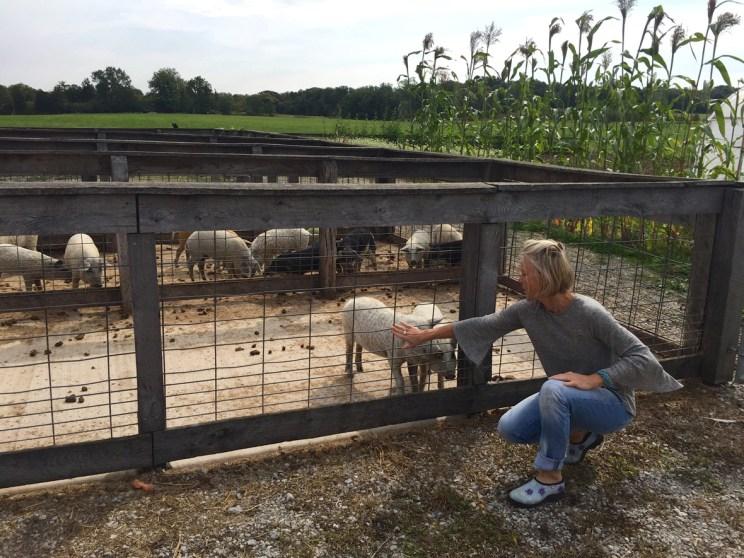 Josph Decuis Farm, Mama ía blog