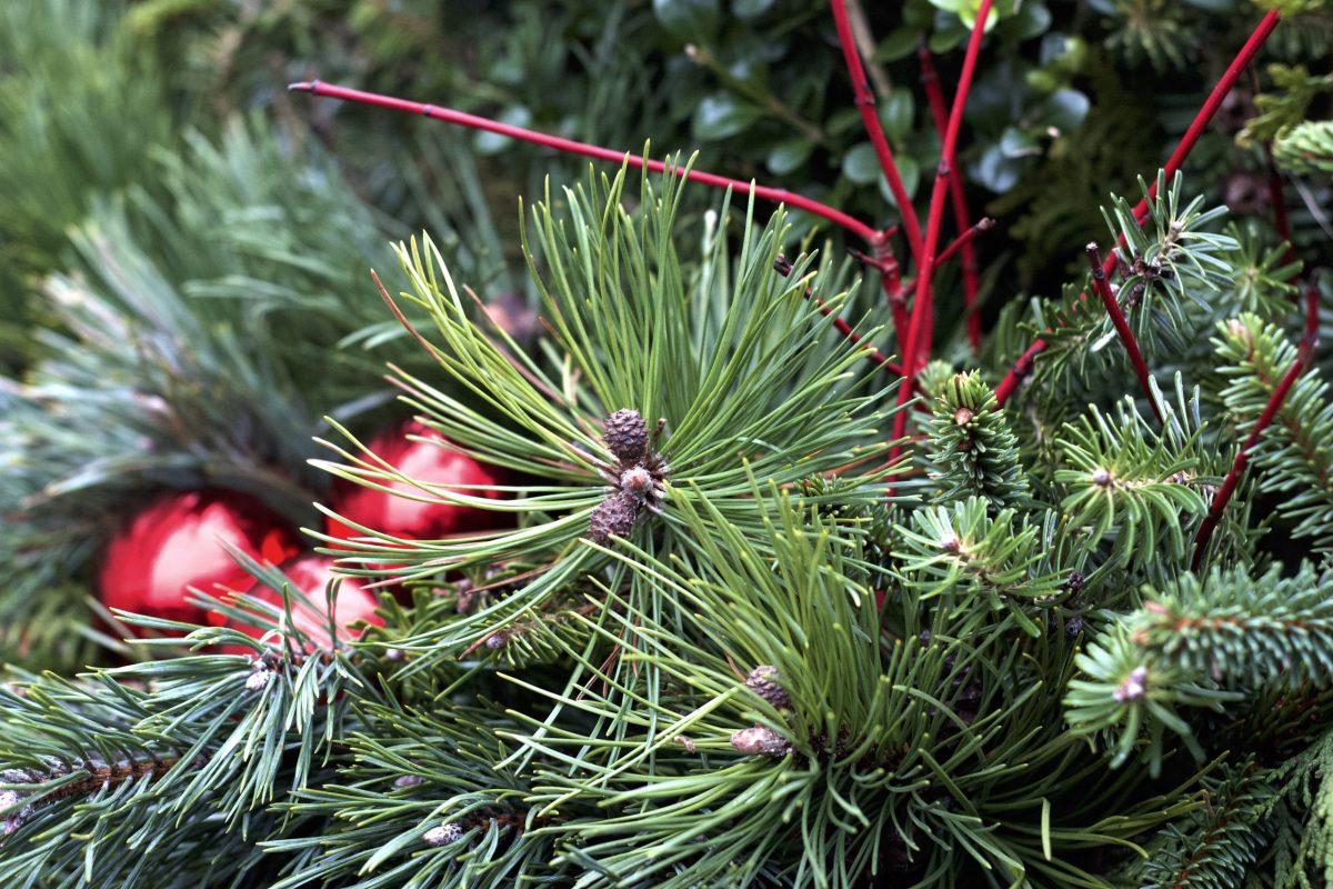 Natalia Lindberg - planteringslåda vintergrön dekoration