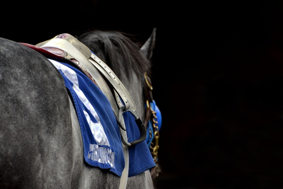 Horse racing benefits all breeds and disciplines of horses with funding for medical breakthroughs.