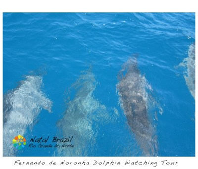 7 Exciting Things to Do in Fernando de Noronha » Natal
