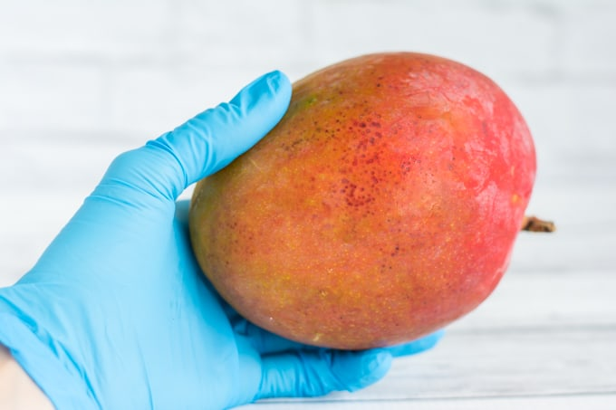 holding mango with a glove