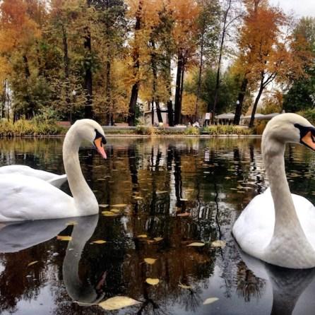 Gorky Park Mosca laghetto