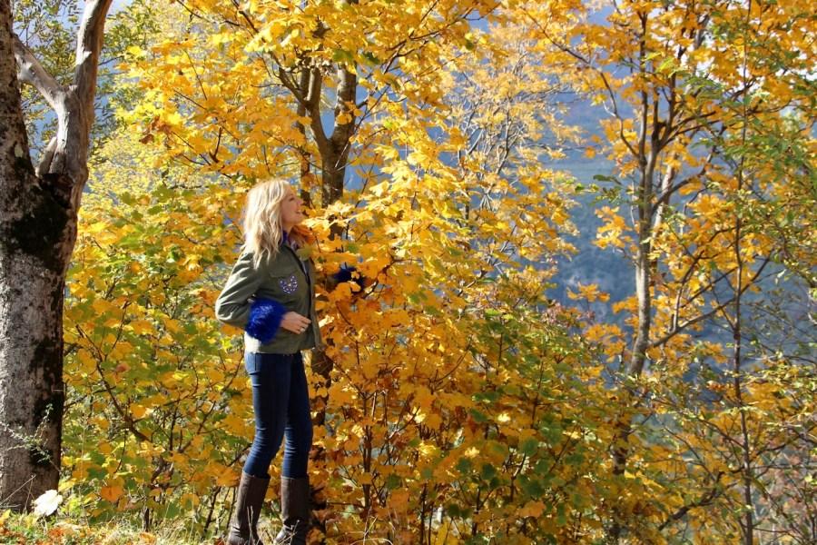 Foliage d'autunno i boschi più belli dove ammirarlo stefanenko natasha