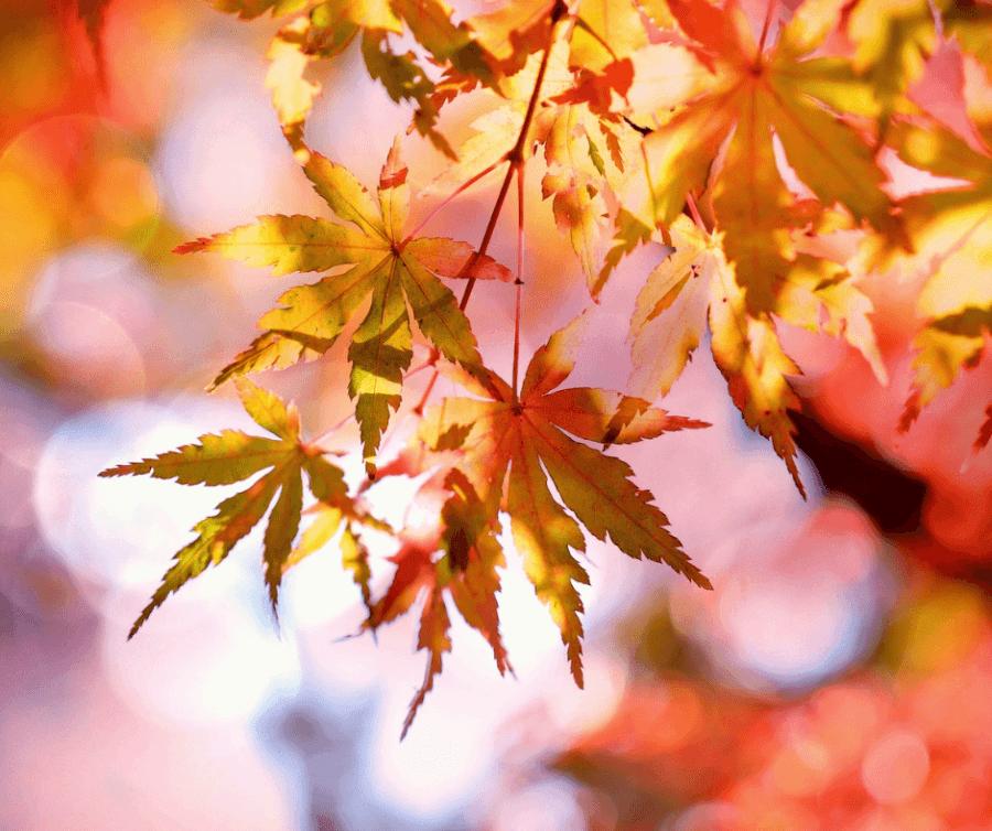 foliage d'autunno 1