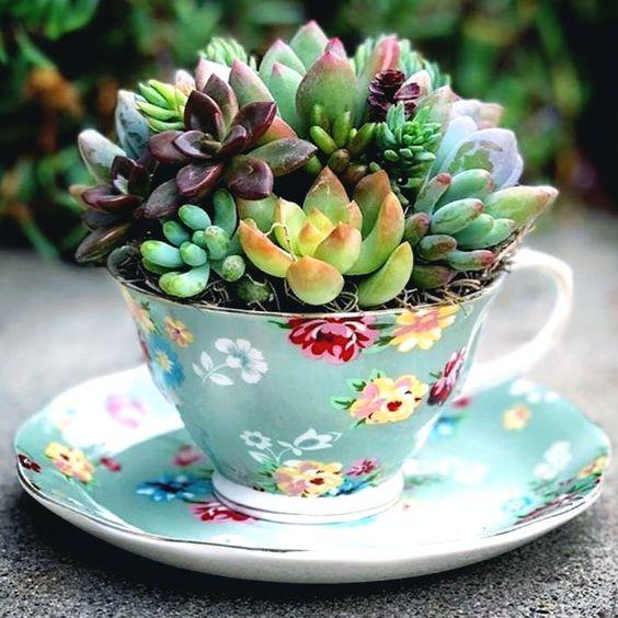 Впустим зелень в жизнь, кактусы