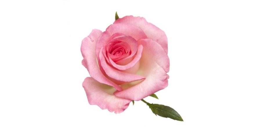 12 средств от темных кругов под глазами, розовая вода