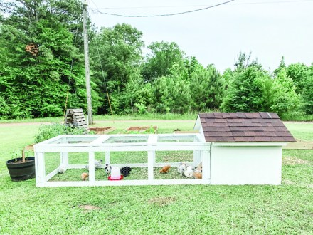 chickens-Silkie Coop