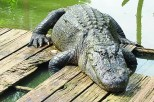 Natchitoches Alligator Park to return as 'Gator Country Louisiana' under new ownership