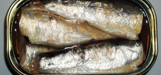 Sardines packed in a can