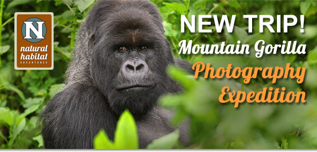 NEW TRIP! Mountain Gorilla Photography Expedition