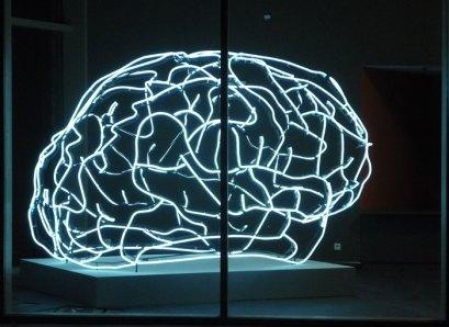 44_cerveau61