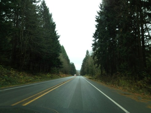 On the way to Bainbridge Island, I got this great picture of trees.