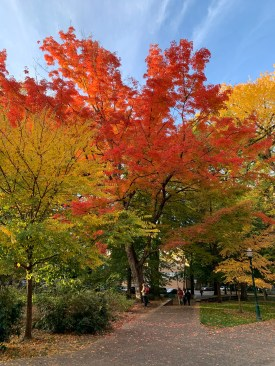 The leaves on the tree growing increasingly more dead, in a way that people find to be beautiful somehow. Leaves range in color from green to yellow, to an umber orange and on to shock-your-mom-with-your-new-hair-red.