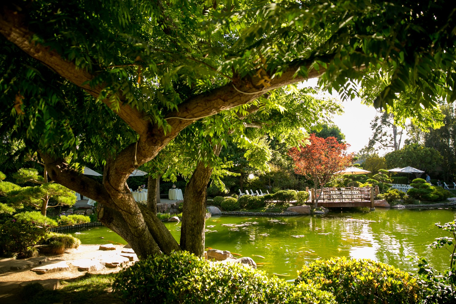 Earl Burns Miller Japanese Garden - Wedding Venue - CSU Long Beach ...
