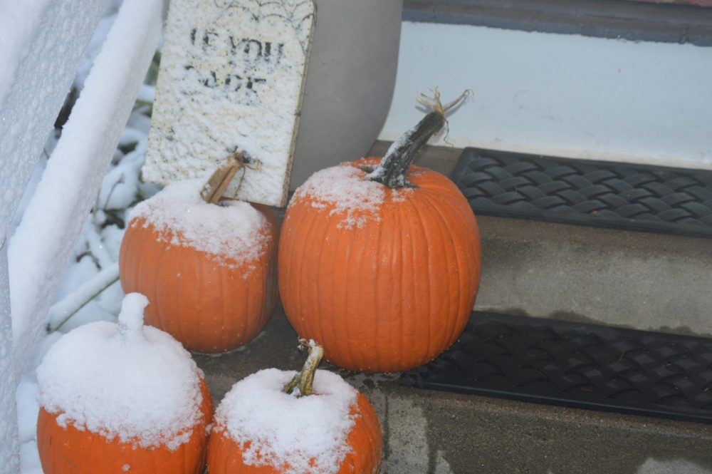 oct snow pumpkins natick