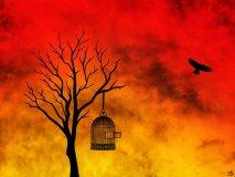 Solo Cristo è capace di donare la vera libertà (Cirillo di Alessandria)