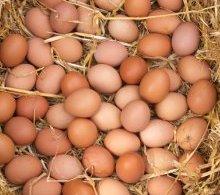 British Egg Week