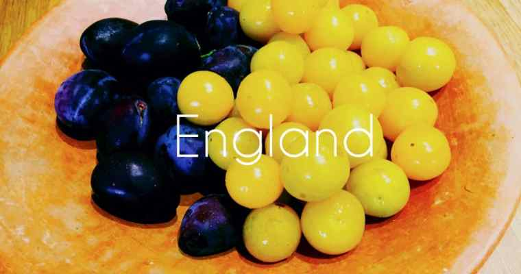 How do you make Plum Gin? | English Plum Gin | National Dish of England