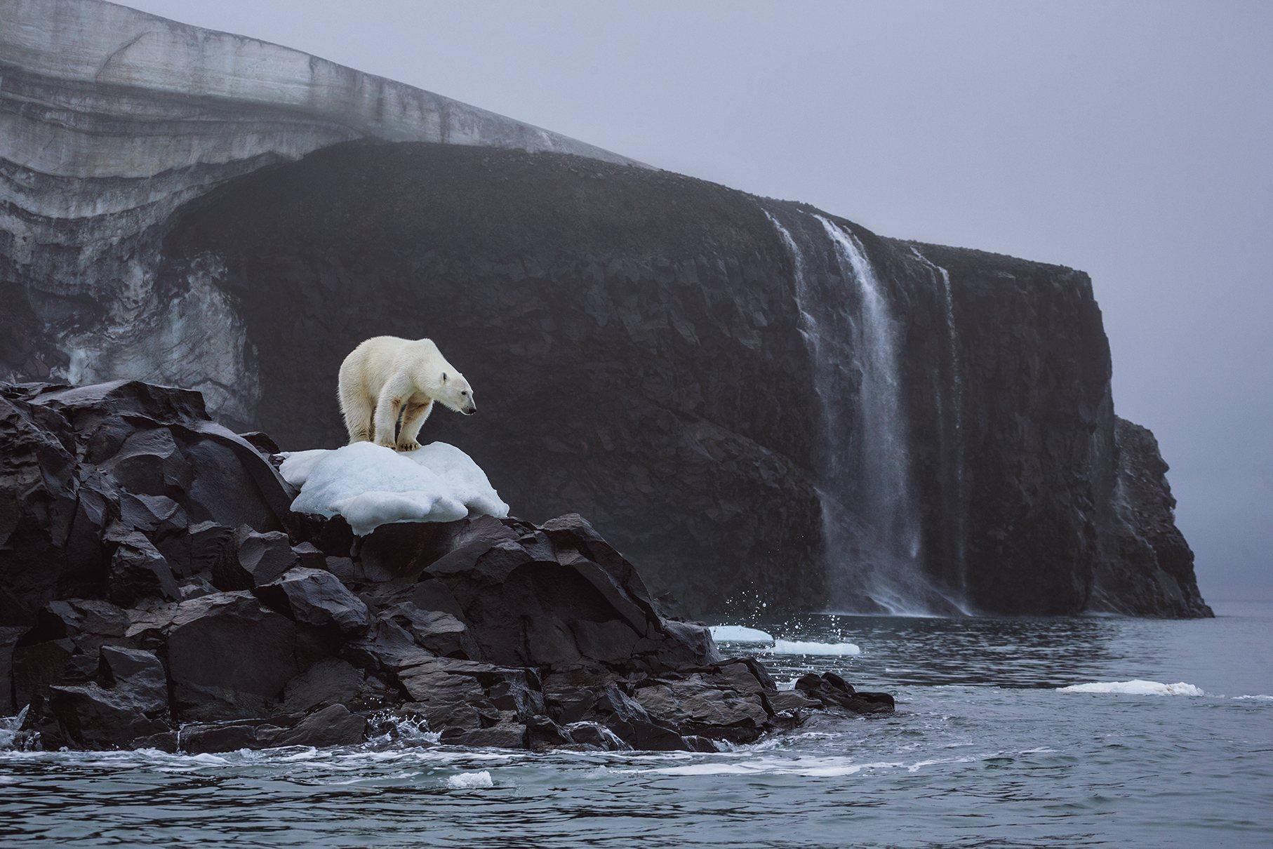 Un oso polar monta guardia en la isla del Príncipe Rodolfo