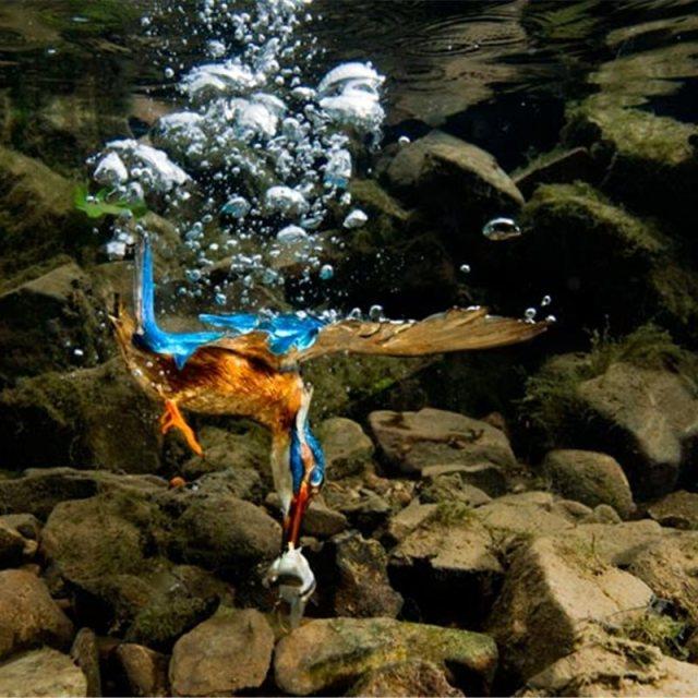Las mejores fotos del martín pescador