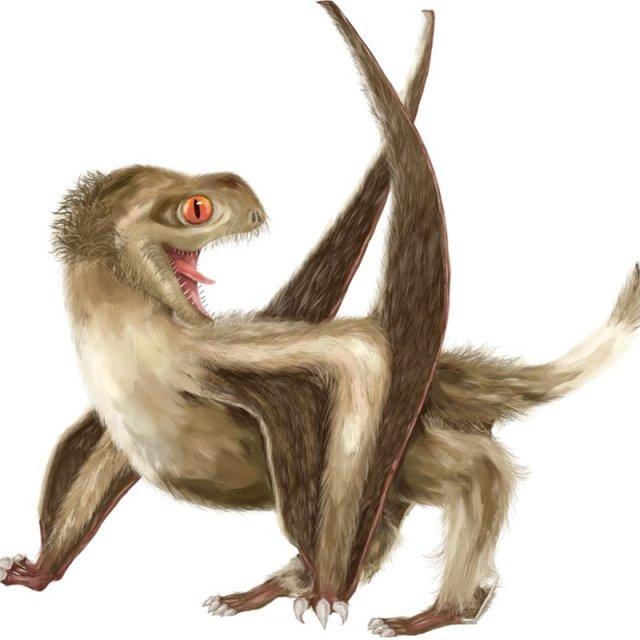 Un asombroso abrigo de pterosaurio de muchas texturas