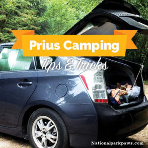 car camping in a toyota prius with dogs