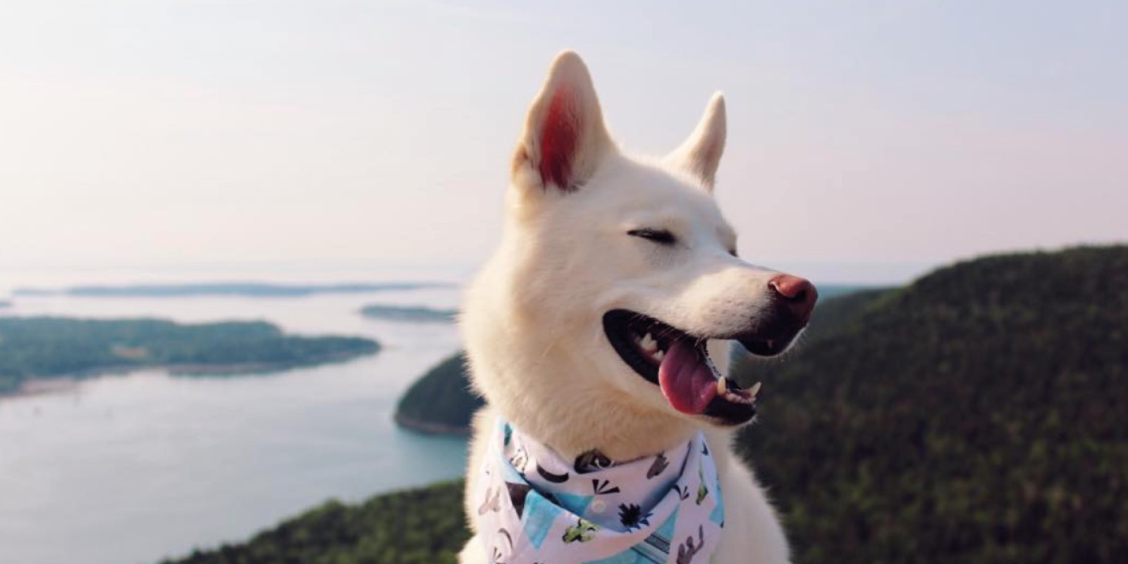 Acadia National Park visited by @zerothewhitehusky