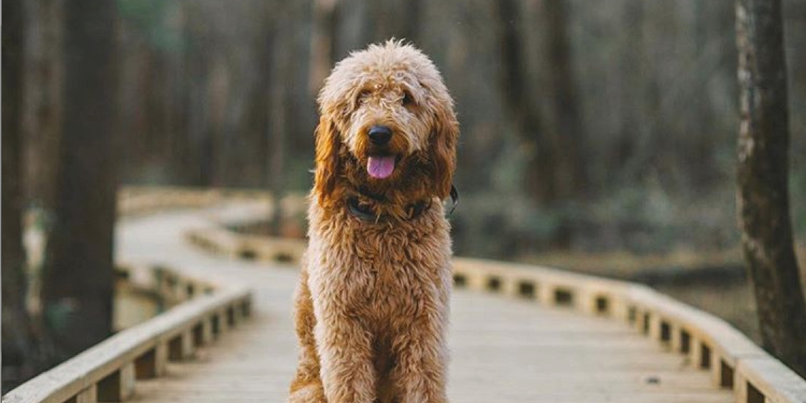 6 most dog friendly congaree national parks