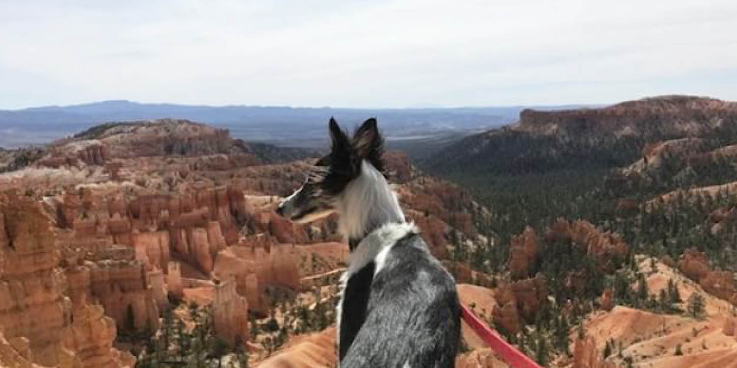 national park paws author cricket needs a bath bryce canyon national park