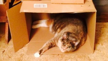 Nyx In Box