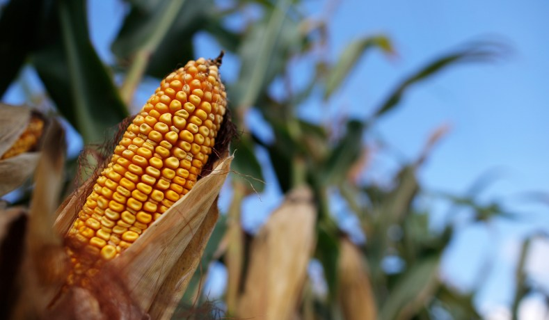 CRISPR & GMOs: Food Production Increases Greatly | National