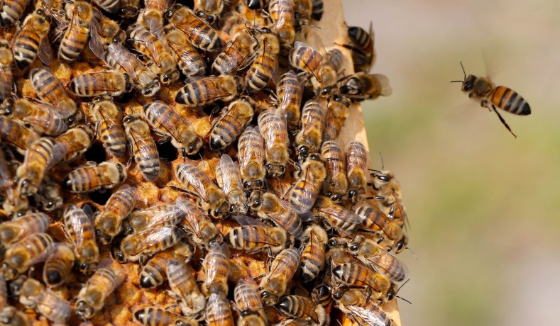 Our Fable of the Bees