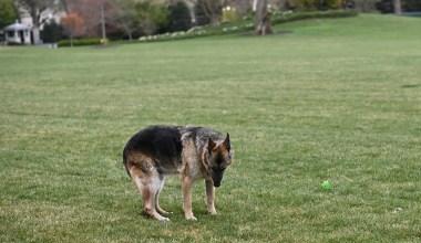 Biden's 'Beloved' Dog 'Champ' Dies