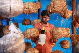 Mushroom cultivation at ICICI Rural initiative