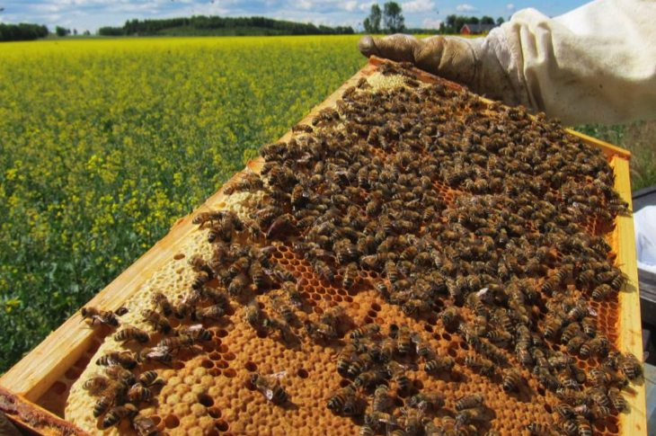 37 Million Bees Instantly Dropped Dead After Farms Started