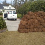 pine straw delivery Savannah Georgia