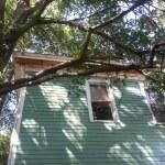 Tree Causing Damage To house Roof Savannah Georgia