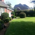Hedge Trimming Savannah Georgia