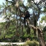 Tree Pruning Savannah Georgia