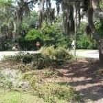 Tree Trimming Savannah Georgia