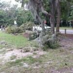 Debris Removal Savannah Georgia