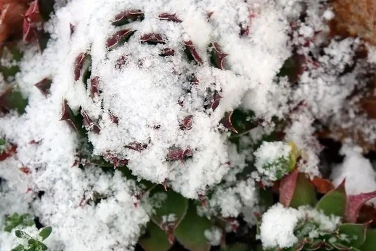 Consigli invernali per le piante grasse