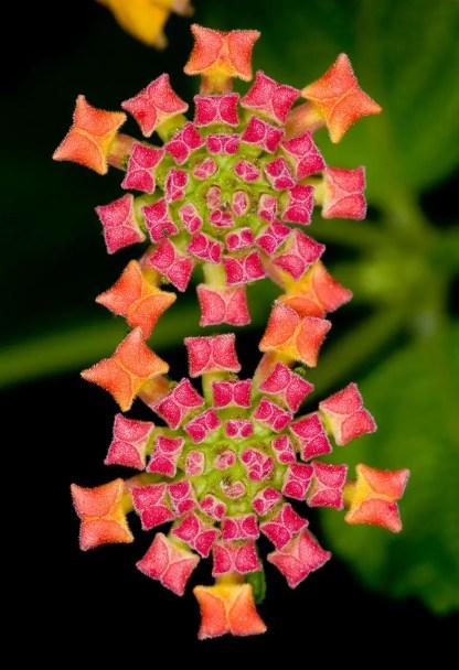 piante-geometriche-in-natura-10
