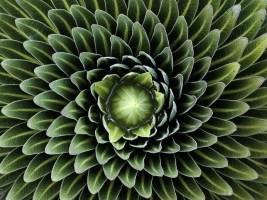 piante-geometriche-in-natura-14