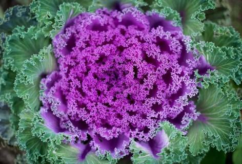 piante-geometriche-in-natura-16