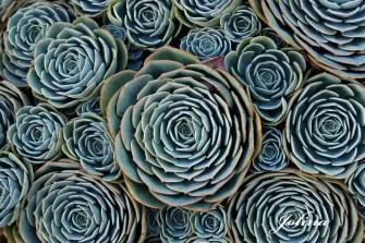 piante-geometriche-in-natura-18