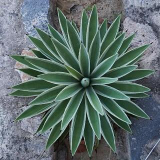 piante-geometriche-in-natura-23