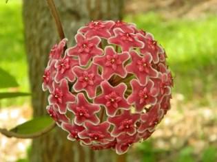 piante-geometriche-in-natura-34