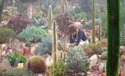 Come prendersi cura delle vostre piante grasse