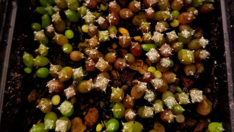 Consigli sulle semine di piante grasse